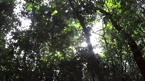 Rainforest Canopy 2. Moving shot looking up at the rainforest canopy with sunlight flaring through stock footage
