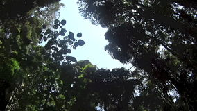 Rainforest Canopy 3 stock footage