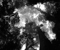 Rainforest Canopy. Rain forest Canopy in the mist Stock Photography