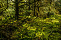 Rainforest at Cape Disappointment, Washington. Stock Photography