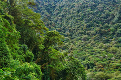 Rainforest in Central America Royalty Free Stock Photo