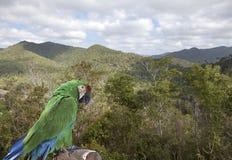 Rainforest close to Soroa, Pinar del Rio, Cuba.  Stock Photos