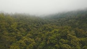 Rainforest in cloud, Bali,Indonesia. Forest, jungle in the mountains of tropical island in the clouds. Aerial view of over tropical rainforest in mountains with stock video
