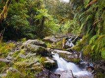 Rainforest creek. A wild creek in a lush tropical rainforest Stock Photo