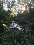 Rainforest creek stock photo
