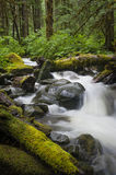 Rainforest Creek Stock Photos