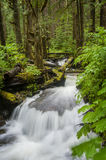 Rainforest Creek. This idyllic small stream meanders through a rainforest environment in the Mt. Baker National Forest near the scenic Nooksack Falls in western Royalty Free Stock Photo