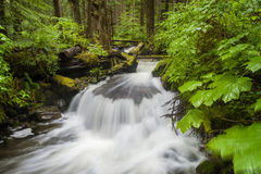 Rainforest Creek Royalty Free Stock Images