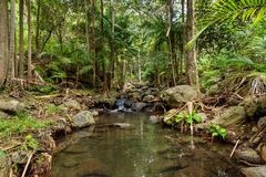Rainforest Creek. Located in the Gold Coast Hinterland you can find many small rivers flowing through the majestic rainforest of Tamborine Mountain Royalty Free Stock Image