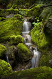Rainforest Creek. A lovely small creek meander through a rainforest environment near Harrison Lake in lower British Columbia, Canada Royalty Free Stock Photos