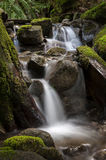 Rainforest Creek. Stock Photography