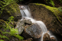Rainforest Creek. Royalty Free Stock Image