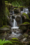 Rainforest Creek. Royalty Free Stock Images