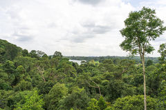 Rainforest. Dense rainforest tree view from above canopy Stock Photography