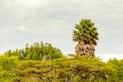 Rainforest Dense Vegetation Stock Image