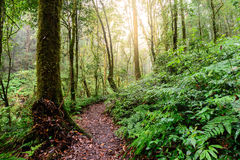Rainforest at Doi Inthanon National Park in Chiang Mai, Thailand.  Royalty Free Stock Photography