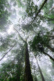 Rainforest at Doi Inthanon National Park in Chiang Mai, Thailand.  Stock Images