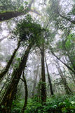 Rainforest at Doi Inthanon National Park in Chiang Mai, Thailand.  Royalty Free Stock Image