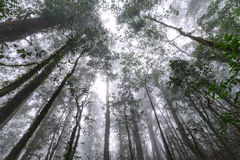 Rainforest at Doi Inthanon National Park in Chiang Mai, Thailand.  Royalty Free Stock Photos