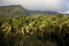 Rainforest, Dominica Royalty Free Stock Photo