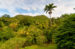 Rainforest, Dominica. Rainforest on Dominica - typical nature of the island stock image