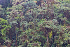 Rainforest in Ecuador. View of cloud forest canopy near Mindo, Northwestern Ecuador Royalty Free Stock Photo
