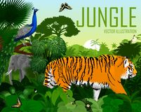 Rainforest för vektorIndien djungel med tigern, elefanten, den manliga påfågelpeafowlen och fjärilar royaltyfri illustrationer
