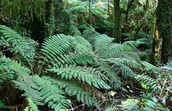 Rainforest ferns Stock Image