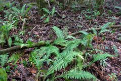Rainforest floor royalty free stock image