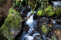 Rainforest floor with satin smooth cool water. Green mossy rocks with a trickling stream of fresh cold water in the rainforests of New Zealand stock images
