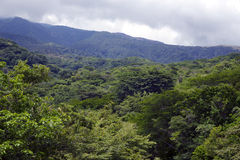 Rainforest at the foot of the Arenal Volcano Stock Image