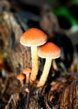 Rainforest Fungi Royalty Free Stock Photography