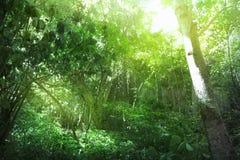 Rainforest Royalty Free Stock Photos