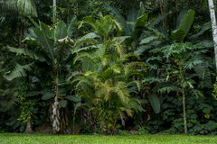 Rainforest. With green tress and grass Stock Photography