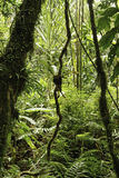 Rainforest green tropical amazon jungle background Stock Photos