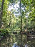 Rainforest Royalty Free Stock Image
