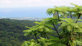 Rainforest, Guadeloupe, Caribbean Stock Images