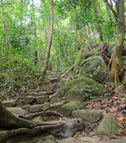 Rainforest hiking trail Royalty Free Stock Photos