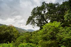 Rainforest i den Aripo dalen - Trinidad & Tabago arkivfoton