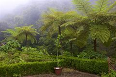 Rainforest i madeiran, Portugal arkivfoton