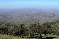 Rainforest In The Simien Mountains Of Ethiopia Royalty Free Stock Photography