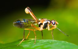 Rainforest insect Stock Photography