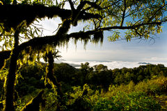 Rainforest at  Intanon National Park Royalty Free Stock Photos
