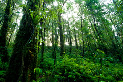 Rainforest at  Intanon National Park Stock Image