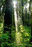 Rainforest at  Intanon National Park Royalty Free Stock Photo