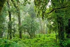 Rainforest at  Intanon National Park Royalty Free Stock Image
