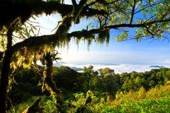 Rainforest Intanon National Park Stock Photo