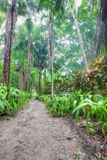 Rainforest in Jamaica Stock Photography