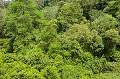 Rainforest jungle background of Borneo island Stock Image