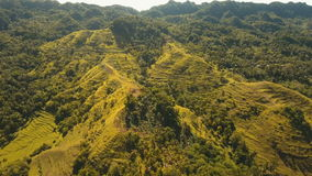 Mountains with tropical forest. Philippines Bohol island. stock footage